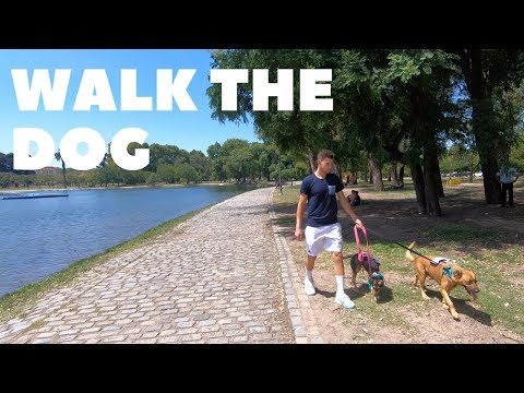 DOG SITTER for a day in Buenos Aires - Dominic Thiem